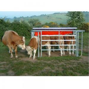 Calf-Creep-feeder-on-website