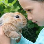 rabbit-tips