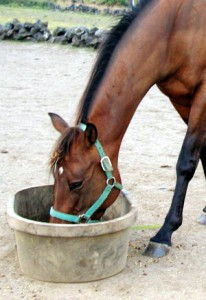 Horse Feeding & Foraging